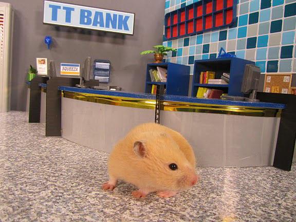 TVO's November 2011 Highlights