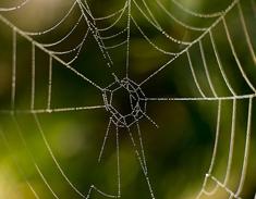 Spiderwebs2