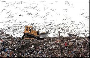 5_Landfill (2)