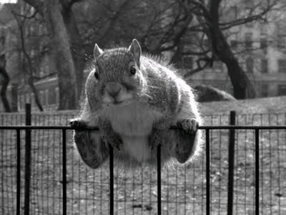 4_Fence Sitter (2)