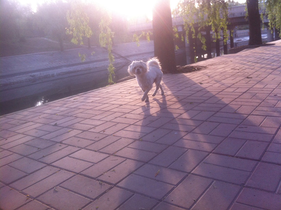 6_dog (2)