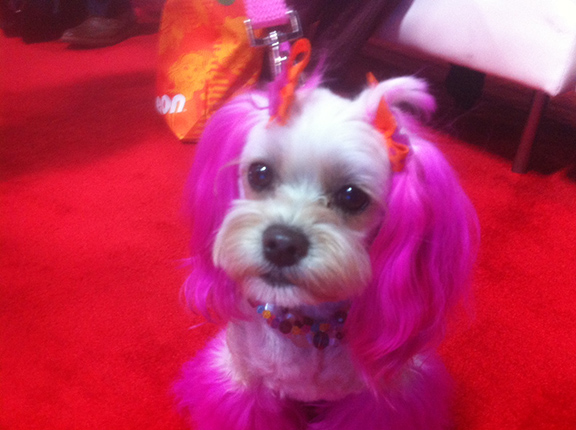 6_pinkdog