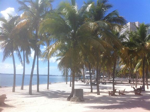 2_palmtrees