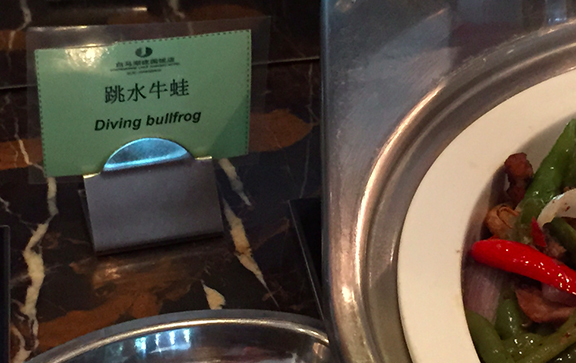 7_bullfrog