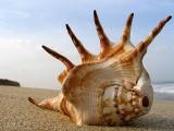 2_shell