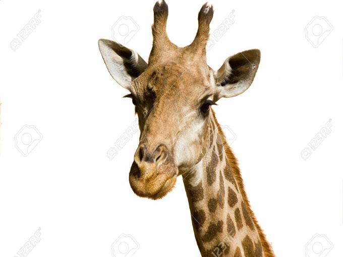 Girafffe
