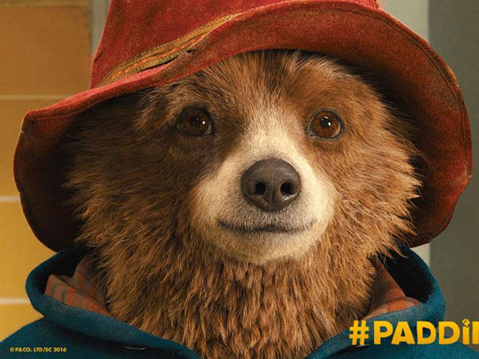 Pad-Bear