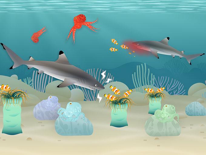 coralreef-tinybop