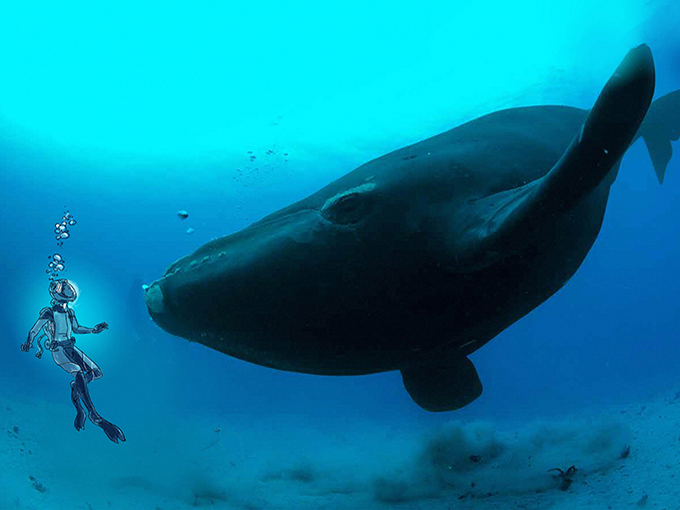 nat geo kids whale resized